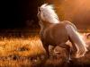Chat3225 - éleveur de chevaux Horzer
