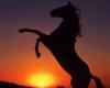 Margauxcheval123 - éleveur de chevaux Horzer