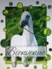 tina1762 - éleveur de chevaux Horzer