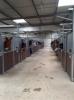 inesneuville22 - éleveur de chevaux Horzer