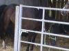 JtmVera - éleveur de chevaux Horzer