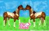 CameliaSso - éleveur de chevaux Horzer