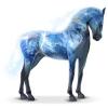 Zilao - éleveur de chevaux Horzer