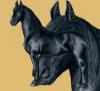 morganejaeger - éleveur de chevaux Horzer