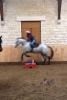 Caramel752 - éleveur de chevaux Horzer