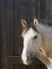 LoveStitchou14 - éleveur de chevaux Horzer