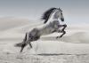 studay - éleveur de chevaux Horzer