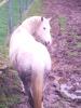 meline3004m - éleveur de chevaux Horzer