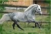 horse01250 - éleveur de chevaux Horzer