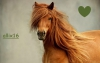 allix16 - éleveur de chevaux Horzer