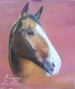 LadyGipsy - éleveur de chevaux Horzer