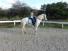 Jibsea971 - éleveur de chevaux Horzer
