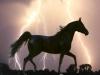 lili010. - éleveur de chevaux Horzer