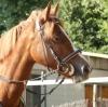 vicky.22 - éleveur de chevaux Horzer