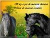londonparis - éleveur de chevaux Horzer