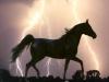 biche3 - éleveur de chevaux Horzer