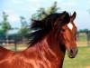 soleil172 - éleveur de chevaux Horzer