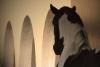 Atlanta21 - éleveur de chevaux Horzer