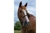 solfege2 - éleveur de chevaux Horzer