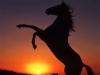 manon53022 - éleveur de chevaux Horzer