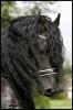 susanne222 - éleveur de chevaux Horzer