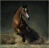 Clarence175 - éleveur de chevaux Horzer
