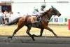 Ellie38 - éleveur de chevaux Horzer