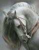 MICA603 - éleveur de chevaux Horzer