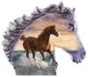 maevareynaud2 - éleveur de chevaux Horzer