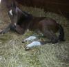 Lili2222222 - éleveur de chevaux Horzer