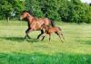 chat2005 - éleveur de chevaux Horzer