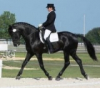 missgalop2 - éleveur de chevaux Horzer