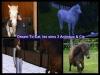 chatna - éleveur de chevaux Horzer