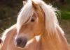 TESSY4 - éleveur de chevaux Horzer