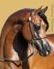 Lou-va - éleveur de chevaux Horzer