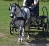 JulieDecoster - éleveur de chevaux Horzer