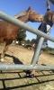 lovade - éleveur de chevaux Horzer