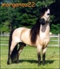 morganou22 - éleveur de chevaux Horzer