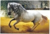 gana3281 - éleveur de chevaux Horzer