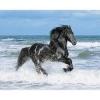 leab99 - éleveur de chevaux Horzer