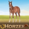 Dreamzer - éleveur de chevaux Horzer