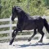 les chevaux de l\'amour
