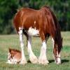 Non à la Maltraitances des chevaux!!!!!