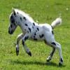dédicaces au chevaux