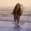 les chevaux de la mer !!