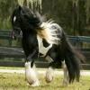 les beau chevaux