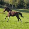 Quel est la capacité de vos chevaux?