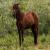 Un équilibre à protéger : les chevaux du Delta du Danube