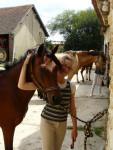 Cheval vikcy et moi - Selle français Femelle (6 ans)