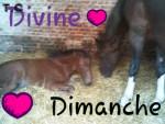 Cheval Dimanche et Divine - Selle français Femelle (16 ans)